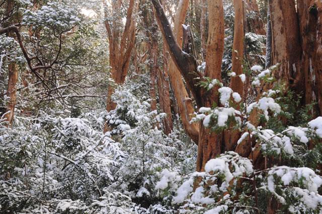 Patagonia Argentina woods